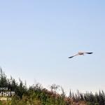 Imagini din Delta Dunarii, Pensiunea Carasuhat